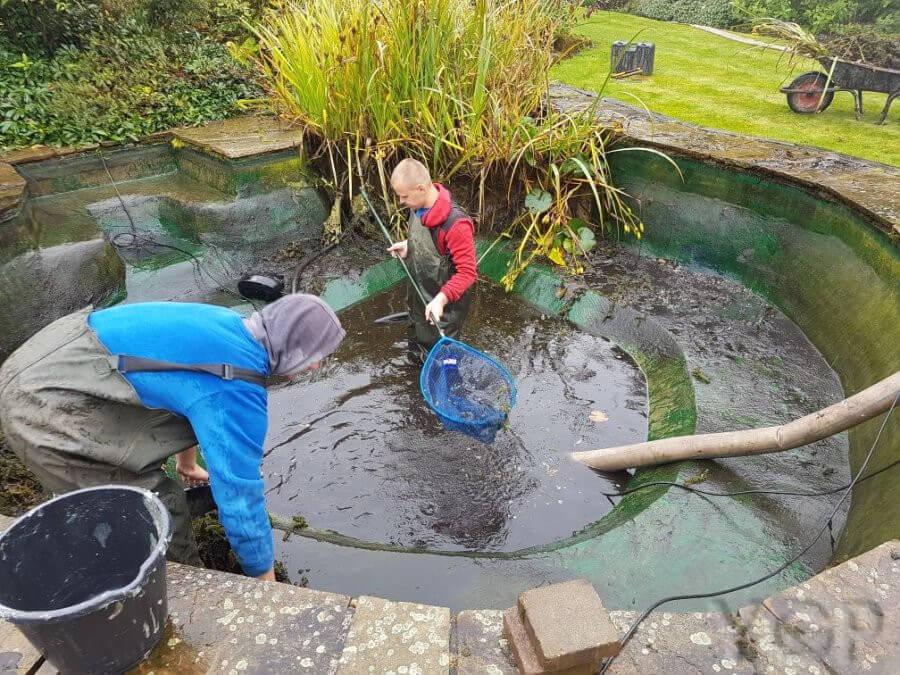 Dấu hiệu nhận biết hồ cá cảnh, bể cá koi cần vệ sinh